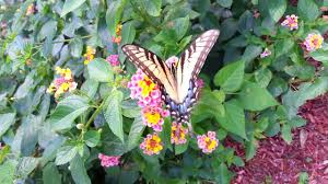 Backyard Series Meet My Friend Benny The Butterfly Afree029 Critters In The