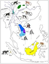 East And Southeast Asia Map by Idealized Distribution Map Of The Ten Odd Nosed Monkey Species In