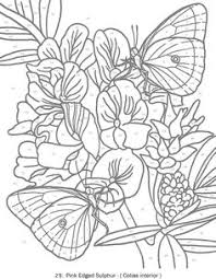 creative haven butterflies color number coloring book