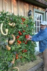 How To Plant Vertical Garden - 9 vegetable gardens using vertical gardening ideas