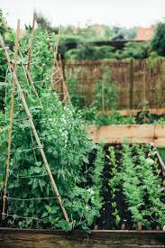 466 best vegetable gardens images on pinterest gardening plants