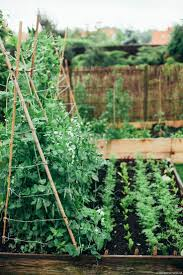 465 best vegetable gardens images on pinterest gardening garden
