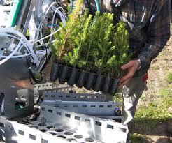 ersson b t bergsten u et al 2014 reloading mechanized tree