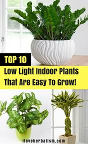 Plants That Dont Need Light Attractive No Light Indoor Plant Tags Office Plants That Don T