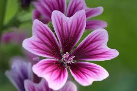 dutch treat philadelphia flower show celebrates holland