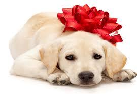 dog ribbon services