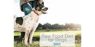 raw food diet for dogs darwin u0027s pet food