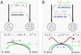 neurobiological models of two choice decision making can be