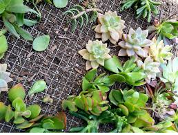 let u0027s craft how to make a succulent wall u2013 modernmom