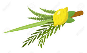 lulav and etrog for sale sukkot set of herbs and spices of the etrog lulav arava hadas