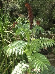 Heat Loving Plants by Plants Real Gardens