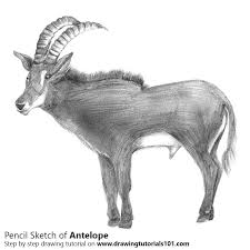 antelope pencil drawing how to sketch antelope using pencils