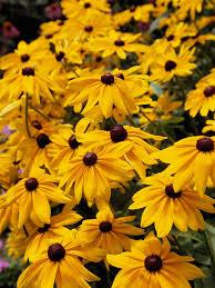 six long blooming perennials