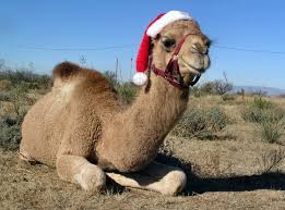 Camel Meme - christmas camel blank template imgflip