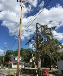Board Of Water And Light Bwl Tree Cutting Causes Distress For Some In East Lansing East