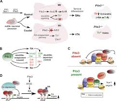 epigenetic mechanisms in the development and maintenance of