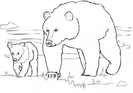 20 free printable bear coloring pages everfreecoloring