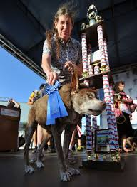 ugliest 10 year old mutt quasi modo crowned the world u0027s ugliest dog