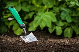 five easy steps to a low maintenance eco friendly landscape