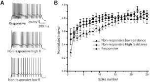 excitatory synaptic feedback from the motor layer to the sensory