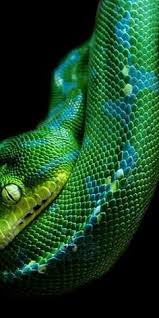 a green snake wallpapers colorful snakes colorful snake wallpaper beautiful snakes