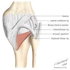 Knee Anatomy Pics Radiology Quiz 9330 Radiopaedia Org