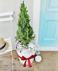 small mini outdoor trees with a theme completely