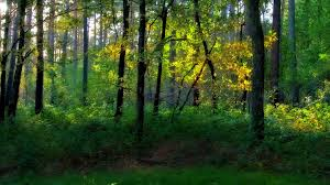 plant forest colors tree hd wallpapers nature green forest