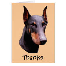 doberman note cards zazzle