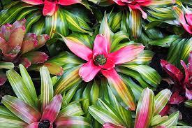 Best Plants For Vertical Garden - 10 best plants for vertical gardens plants gardens and garden