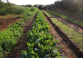 kimango farms sustainable farming conservation kimango farms