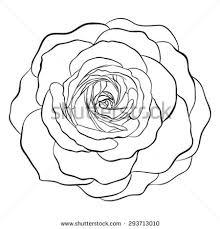 beautiful monochrome black white rose isolated stock illustration