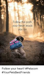 Follow Your Heart Meme - follow the path your heart leads you on follow your heart petacom