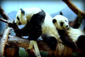 we went wild over zoo atlanta familyfun summer atlanta the