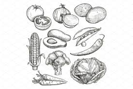 vegetables sketches icons creative market
