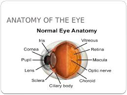 limbus eye anatomy choice image learn human anatomy image