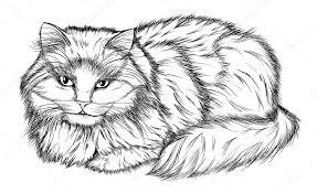 imagenes a lapiz de gatos dibujo a lápiz gato blanco y negro de mentira archivo imágenes