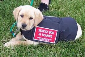 How Does A Guide Dog Help A Blind Person How Can Service Dogs Help Parkinson U0027s Pdcommunity