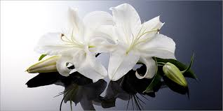 Sympathy Flowers Sympathy Cards U0026 Funeral Flowers In Glasgow U0026 Rutherglen Scotland