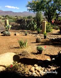 ramblings from a desert garden az plant lady