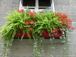 What To Plant In Window Flower Boxes - techniques of the trade planting the perfect window box u2013 the