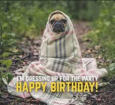Birthday Pug Meme - best 25 funny happy birthday meme birthday meme funny memes
