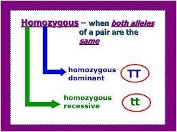 example of genotype catalyst 1what is an example of genotype