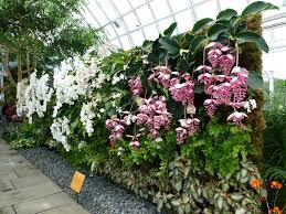 orchid show vertical garden wall 1 cane orchids flickr