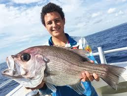 moreton island fishing charters manly australia fishingbooker