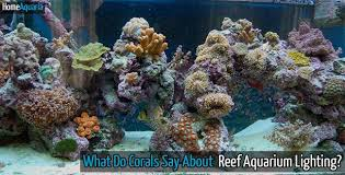 Reef Aquarium Lighting What Do Corals Say About Reef Aquarium Lighting Home Aquaria