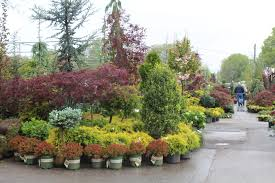trees shrubs 2 family tree nursery