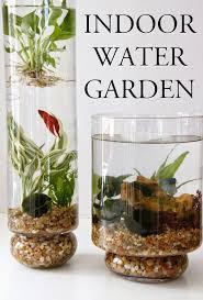 indoor water garden u2013 growing plants in water year round