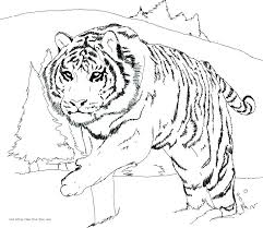 snow tiger coloring page cute tiger cub coloring pages printable coloring leopard coloring