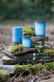 chesapeake bay native plants 10 best yoga u0026 candles images on pinterest chesapeake bay